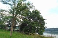 Prelep plac na obali jezera Gruza sa temeljom kuce