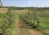 Imanje tj.vocnjak jabuke i sljive u Irigu